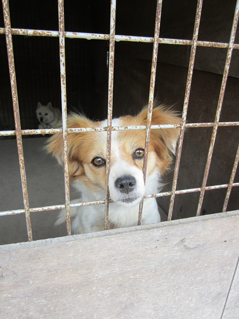 pet abuse-animal abuse-animal rescue-animal cruelty-National Humane Society